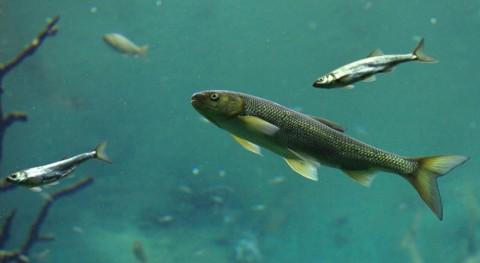¿Cómo extraer colágeno marino partir residuos pesqueros?