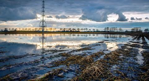 ¿Cómo muda piel ecosistema costero afectado petróleo?