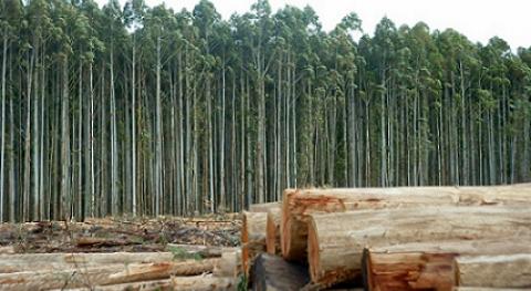 EUCALIVA: proyecto europeo reutilizar residuos industria papelera