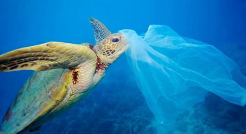 residuos plástico invaden playas chilenas