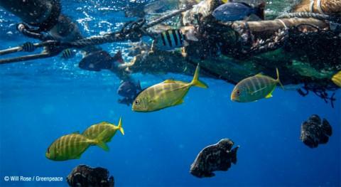 Plásticos mares y océanos: amenaza creciente pescado y marisco