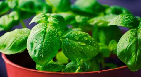 contaminación radioactiva alimentos México, estudio