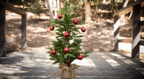 Recicla tu árbol Navidad Ciudad México