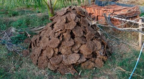 Gobierno Canarias aborda Aldea San Nicolás gestión residuos agrícolas