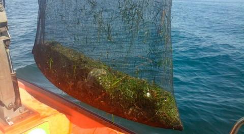 Retiradas 44 toneladas residuos litoral Islas Baleares temporada 2017