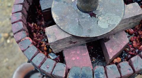 residuos producción vino podrían servir como nuevo biocombustible