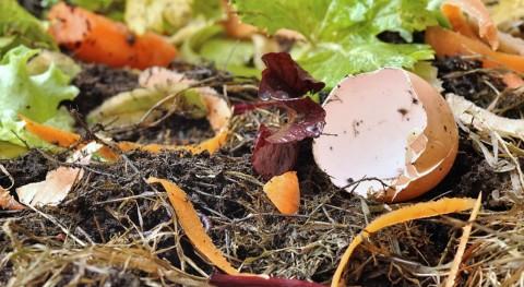 ¿Cómo transformar residuos orgánicos hidrógeno?