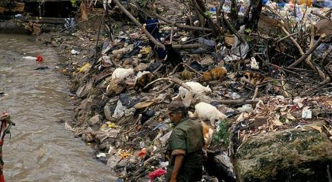 entornos contaminados o poco saludables causan 12,6 millones muertes al año