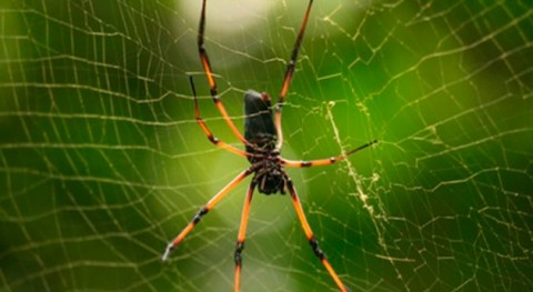 método bioinspirado logra hilar fibras seda artificial como lo hacen arañas