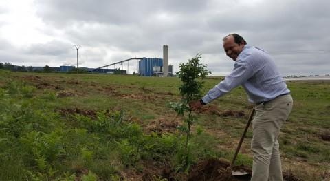 Culmina proceso revegetación complejo industrial Sogama Cerceda