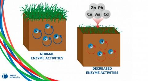 investigación arroja nuevos datos cómo dañan metales pesados suelos