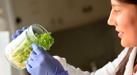 busca plástico biodegradable partir tabaco transgénico