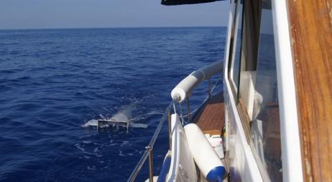 plástico tarda siglo convertirse parte ecosistema marino Mediterráneo