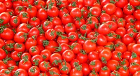 tercio comida que se produce España acaba basura