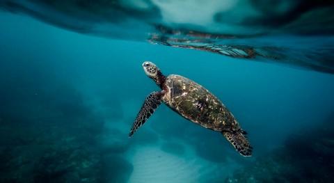 plástico océanos, peor pesadilla tortugas marinas