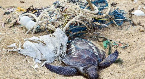 Tortugas, víctimas atracción fatal plástico