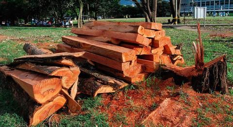 ¿Cómo fabricar madera plástica desechos naturales?