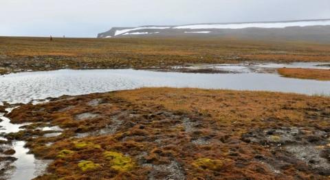 ¿ qué hay elevadas concentraciones mercurio tundra ártica?
