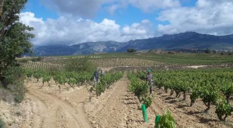 Diputación y Unión Agroganadera Álava se reúnen elaborar sistema recogida residuos plásticos agropecuarios