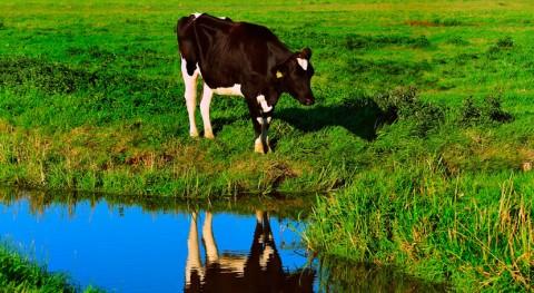 Cómo contaminar menos enseñando vacas ir al baño