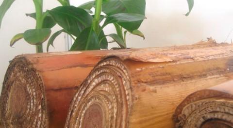 ProyectoEcobanana: Transformando desechos vástago papel tapiz
