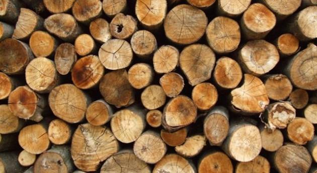 Diseñan planta aprovechar al 100% biomasa forestal