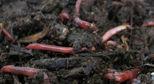 """"""" vermicompostaje es técnica alto potencial gestión residuos orgánicos"""""""