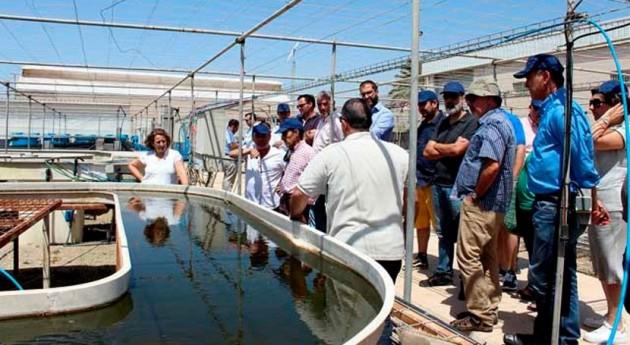 Microalgas, alternativa pionera depuración purines granjas porcinas