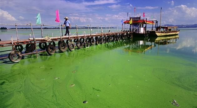 ¿Cómo ha pasado fósforo nutriente contaminante global?