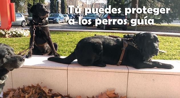 Ellos no llevan calzado: Campaña proteger perros guía consecuencias botellón