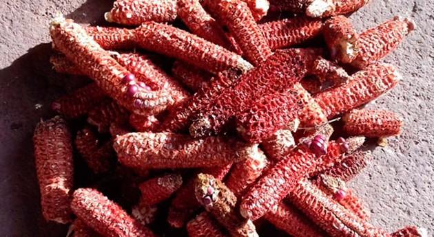 desechos maíz, materia prima pigmentos nutracéuticos