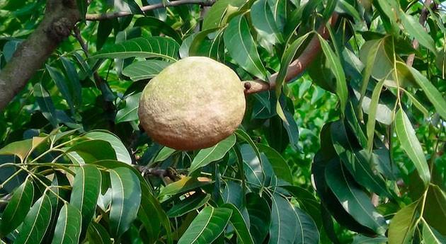 modelo matemático predice rendimiento compuestos procedentes residuos mango