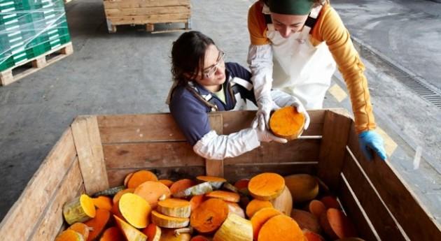 Transforman residuos vegetales destinados al vertedero harinas piensos