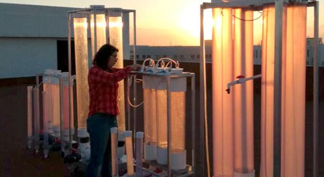 busca generación superalimentos partir microalgas