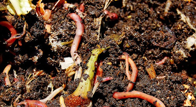 """"""" vermicompost es mejores abonos orgánicos que existen naturaleza"""""""