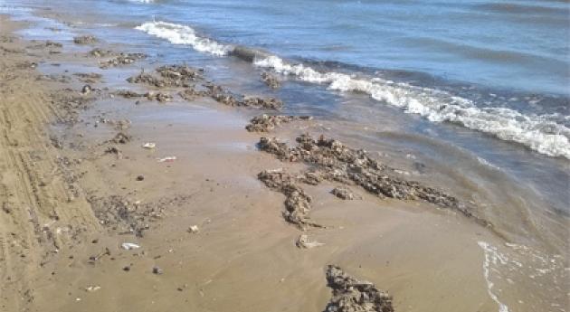 playa Alboraya aparece llena toallitas higiénicas tormenta