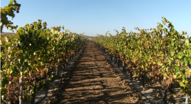 aplicación residuos orgánicos al suelo modifica velocidad disipación fungicidas