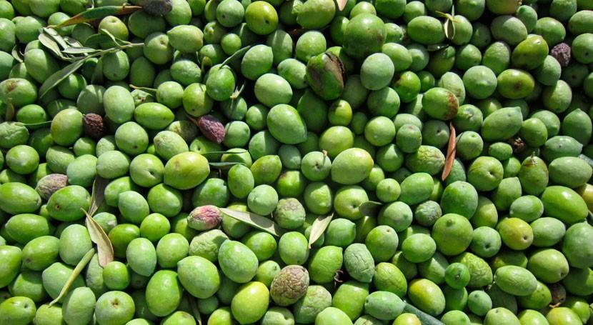 subproductos elaboración aceite oliva, base obtener nuevos nutracéuticos