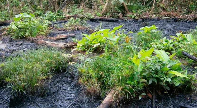 Emgrisa y SERECO acuerdan colaborar proyectos descontaminación suelos