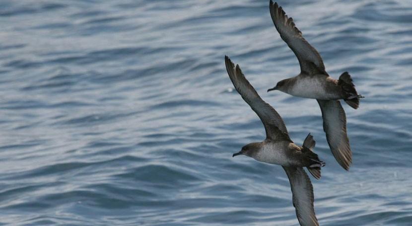 olor vertidos plásticos océano confunde aves marinas