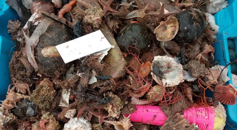estudio CSIC revela que basura invade redes pesca áreas cercanas ciudades