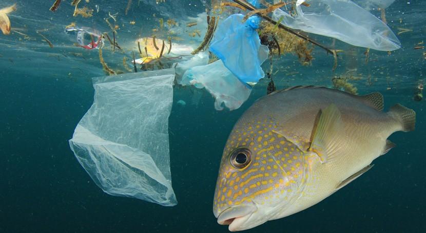 Parlamento Europeo pide medidas urgentes UE reducir residuos marinos