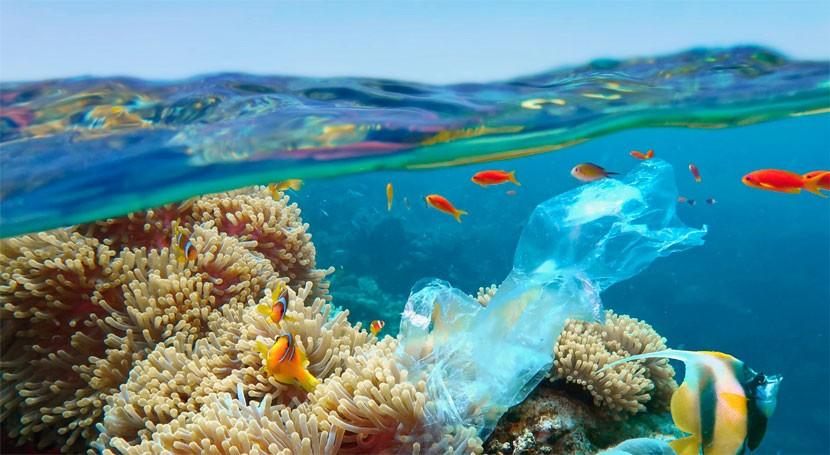 estudio UAL incide gran problema presencia plástico fauna marina