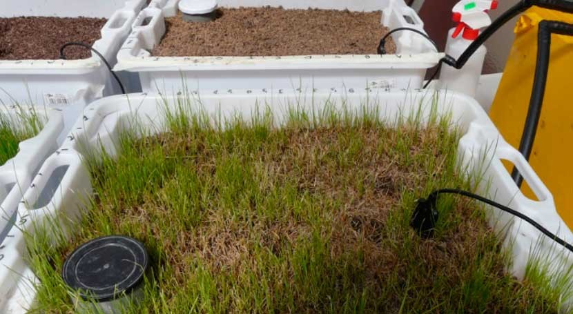 residuos olivar como método depurar restos fármacos aguas urbanas