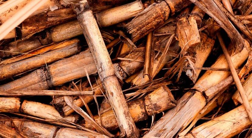 MAPAMA convoca ayudas cooperación suministro sostenible biomasa