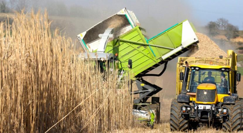 producción y movilización biomasa puede ayudar combatir cambio climático