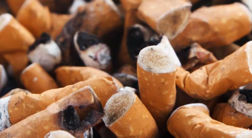 segunda vida colillas cigarro: materia prima obtener celulosa
