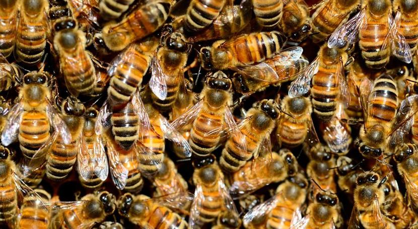 Detectan primera vez microplásticos cuerpo abejas