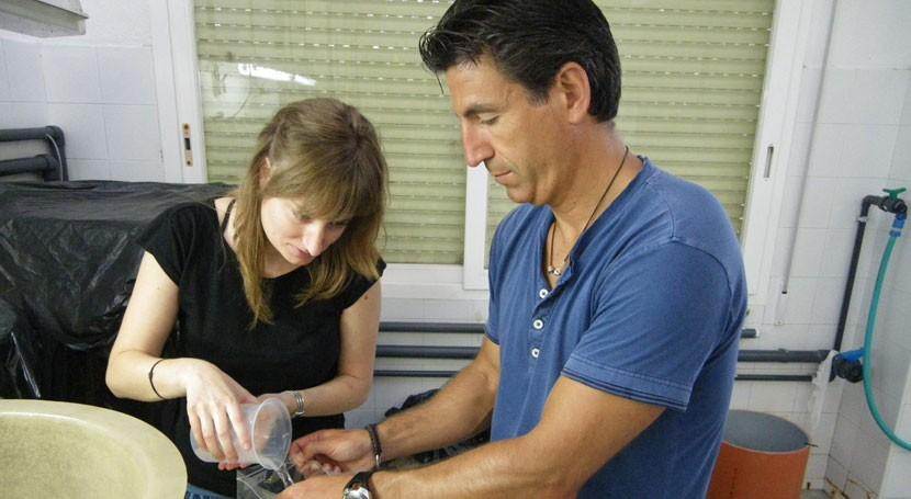 ¿Cómo afecta radiación ultravioleta toxicidad cremas solares vida marina?