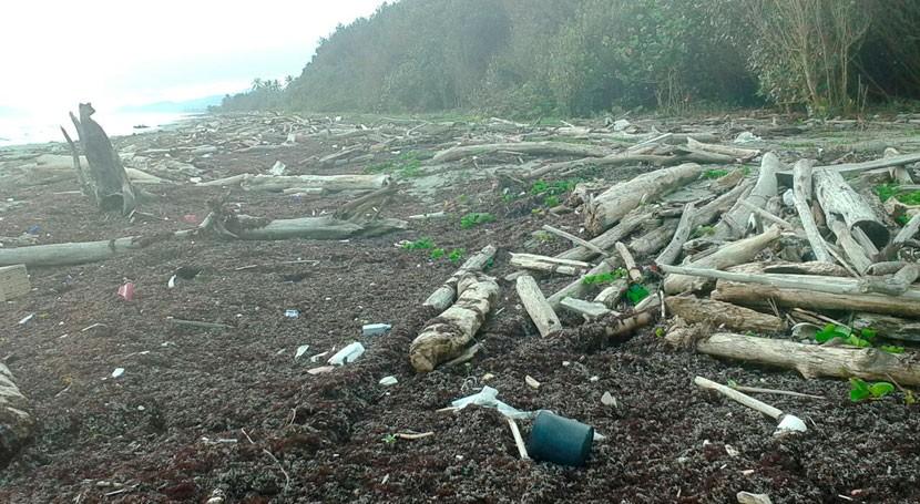 residuos tala bosques tropicales afectan reproducción tortuga laúd